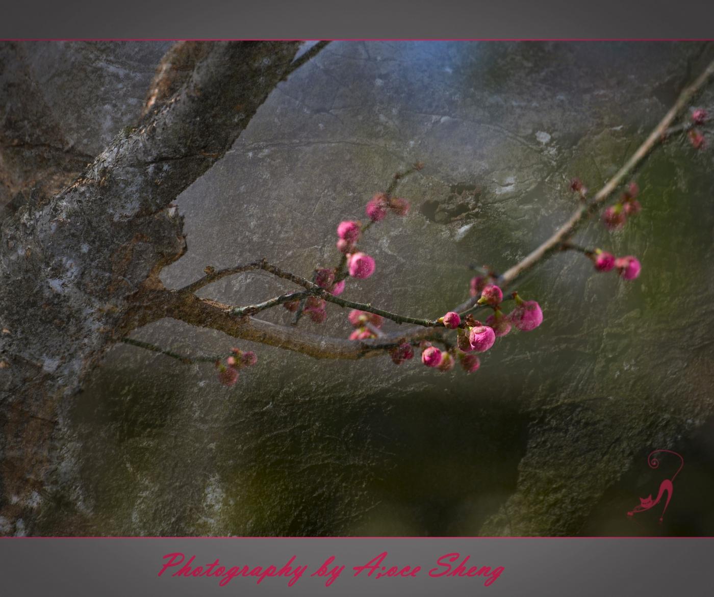 迎春花以盛开,春天快来临了_图1-4