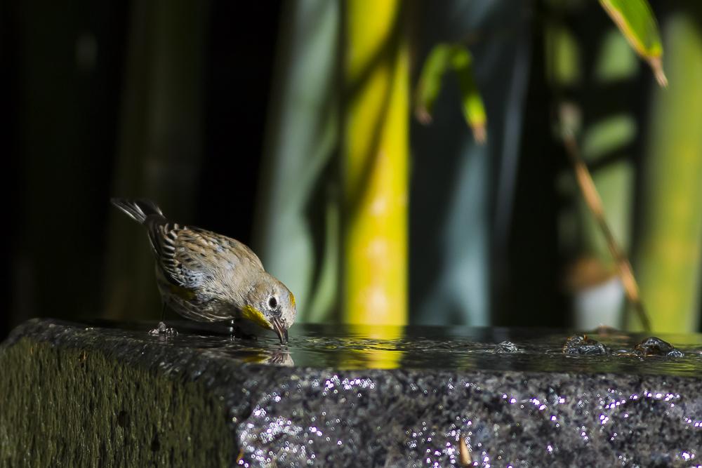 偷窺小鳥洗澡!_圖1-3