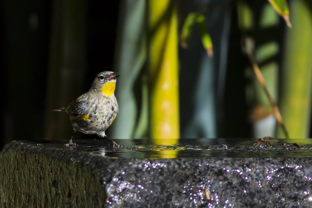 偷窺小鳥洗澡!_圖1-4