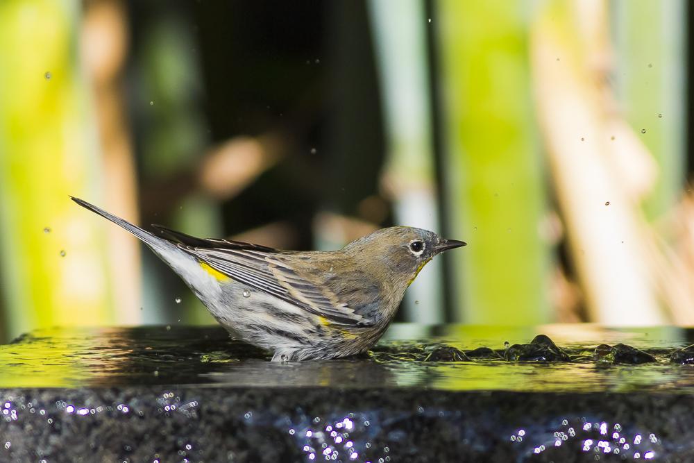 偷窺小鳥洗澡!_圖1-5
