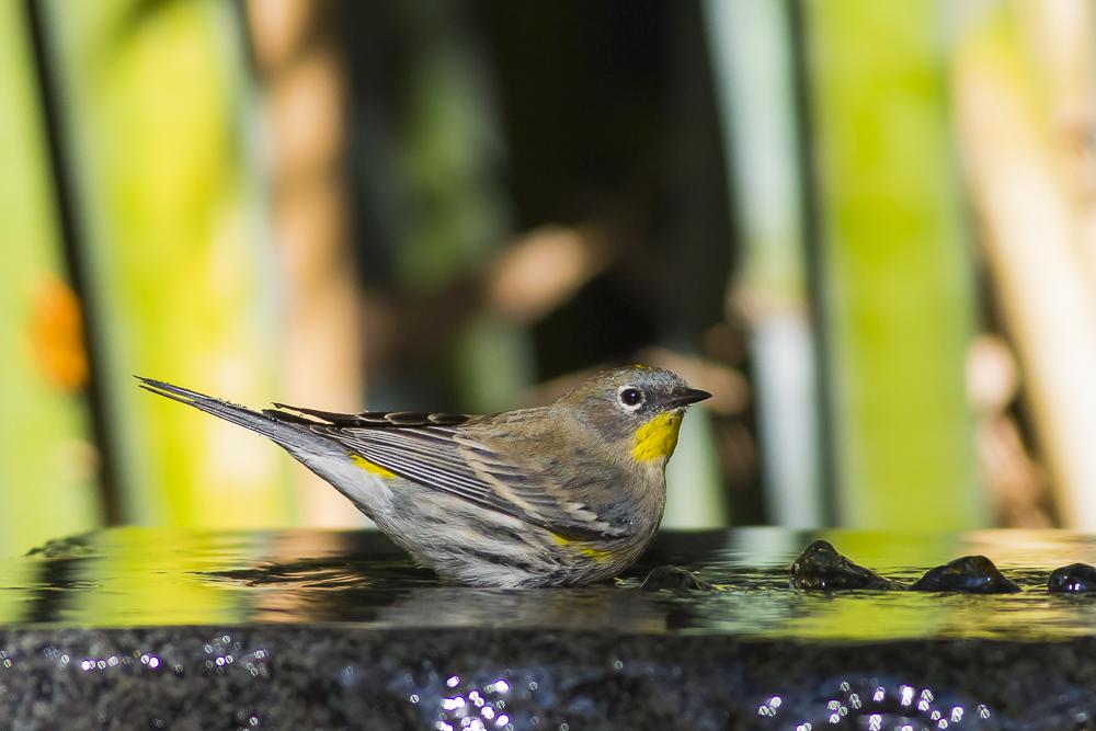 偷窺小鳥洗澡!_圖1-6