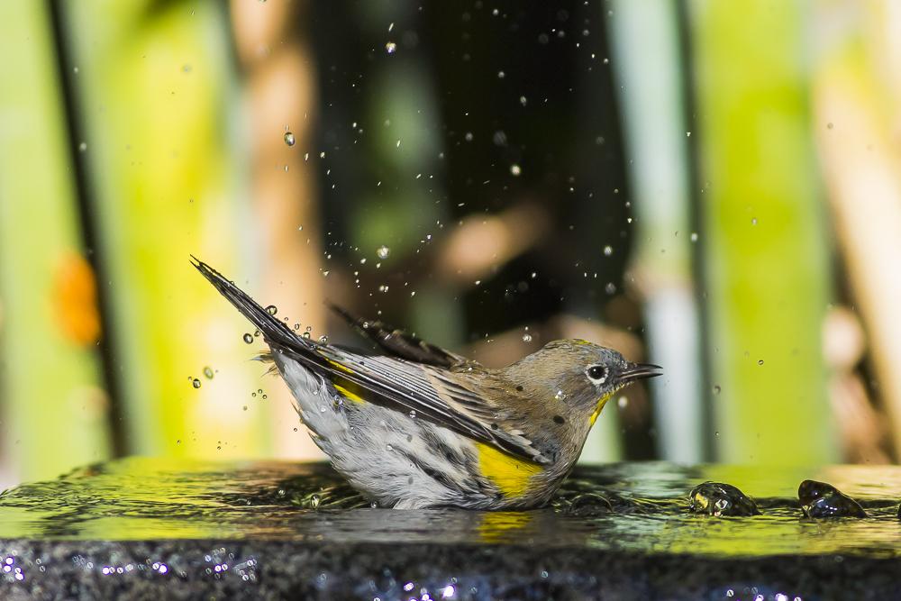 偷窺小鳥洗澡!_圖1-7