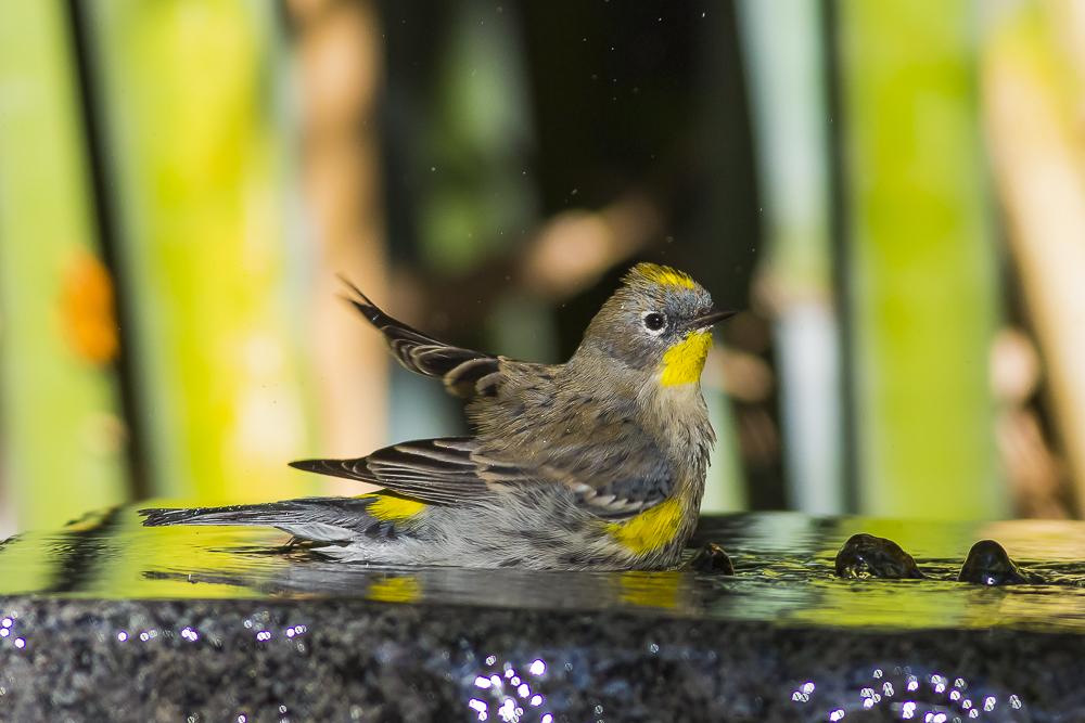 偷窺小鳥洗澡!_圖1-9