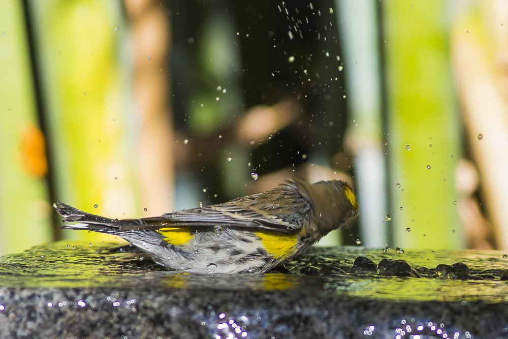偷窺小鳥洗澡!_圖1-10