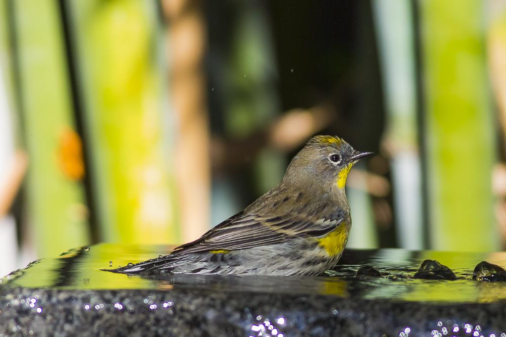 偷窺小鳥洗澡!_圖1-11