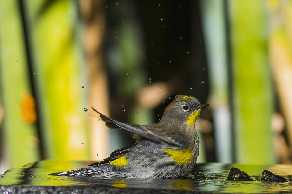 偷窺小鳥洗澡!_圖1-13