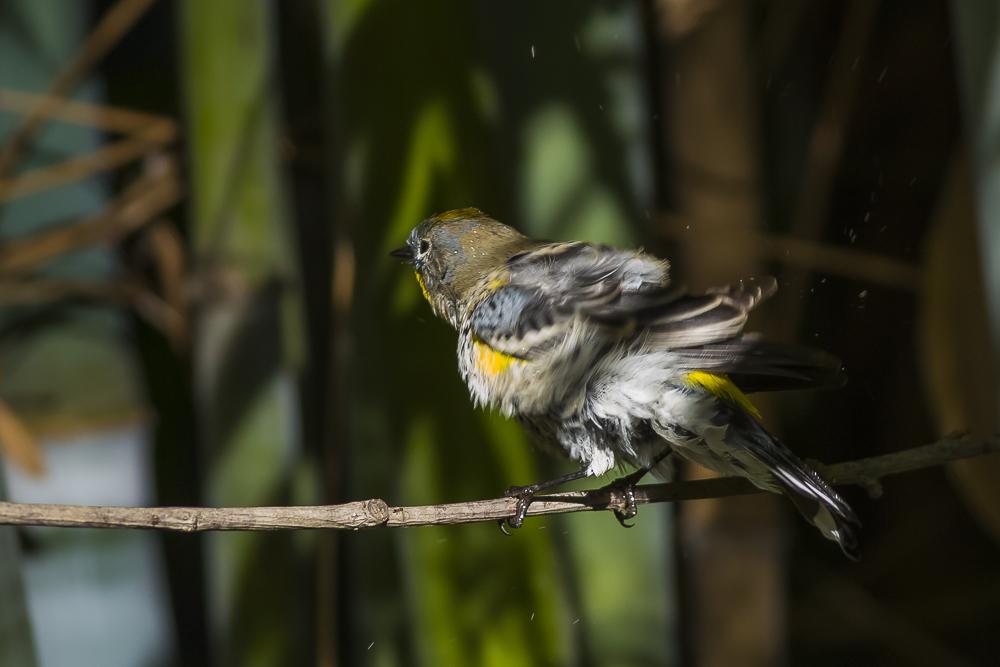 偷窺小鳥洗澡!_圖1-14