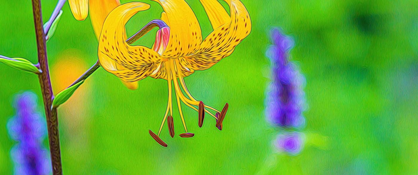 春天的舞步_图1-7