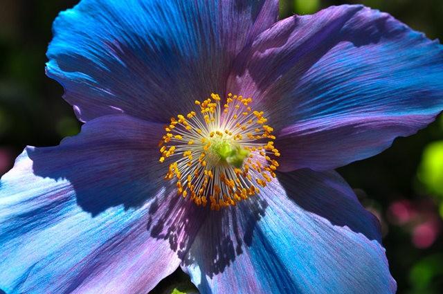 举世闻名的花园......春到长木公园_图1-1