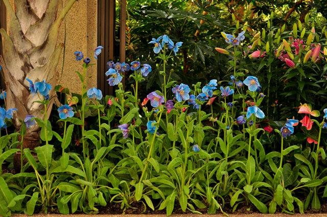 举世闻名的花园......春到长木公园_图1-2