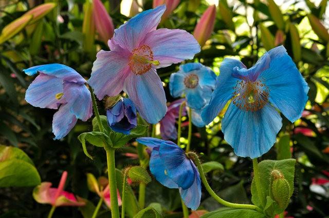 举世闻名的花园......春到长木公园_图1-3