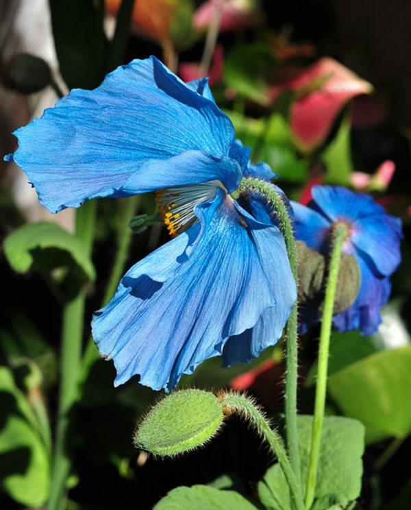 举世闻名的花园......春到长木公园_图1-4