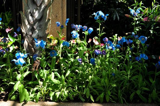 举世闻名的花园......春到长木公园_图1-5
