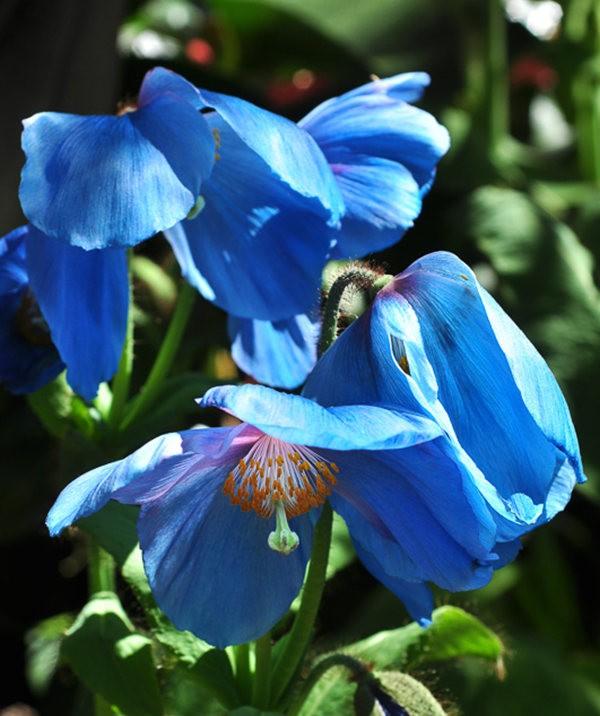 举世闻名的花园......春到长木公园_图1-7