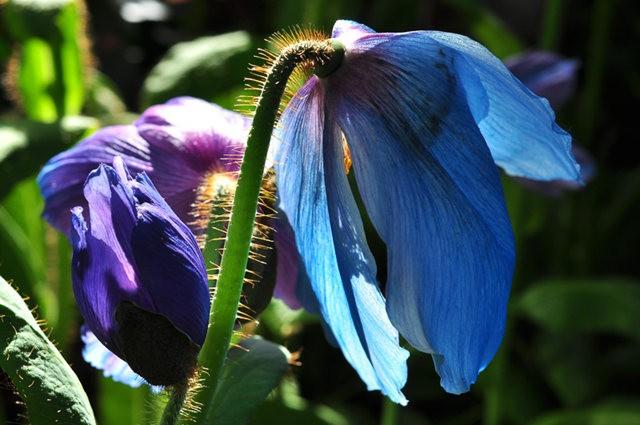 举世闻名的花园......春到长木公园_图1-8