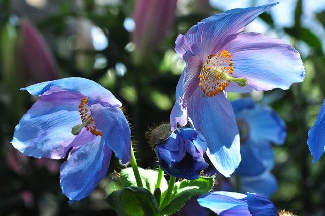 举世闻名的花园......春到长木公园_图1-9
