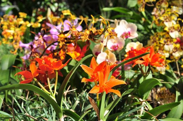 举世闻名的花园......春到长木公园_图1-11