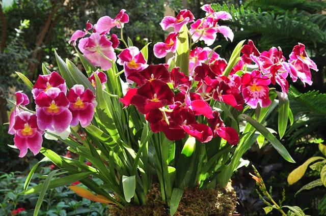举世闻名的花园......春到长木公园_图1-15