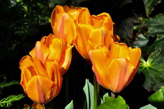 举世闻名的花园......春到长木公园_图1-16