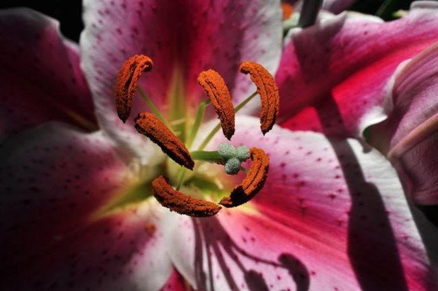 举世闻名的花园......春到长木公园_图1-18