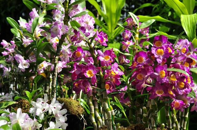 举世闻名的花园......春到长木公园_图1-22