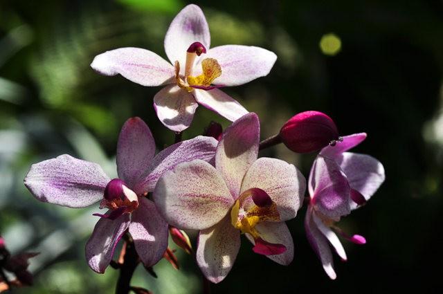 举世闻名的花园......春到长木公园_图1-24