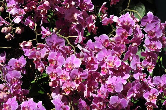 举世闻名的花园......春到长木公园_图1-25