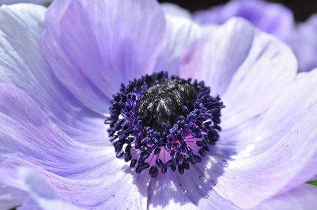 举世闻名的花园......春到长木公园_图1-27