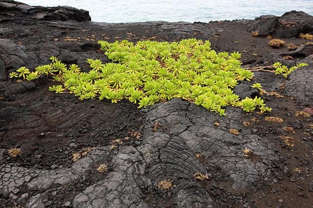 夏威夷溶岩_圖1-3