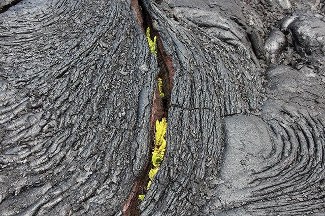 夏威夷溶岩_图1-4