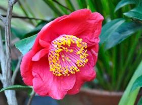 塔山植物园拍山茶花