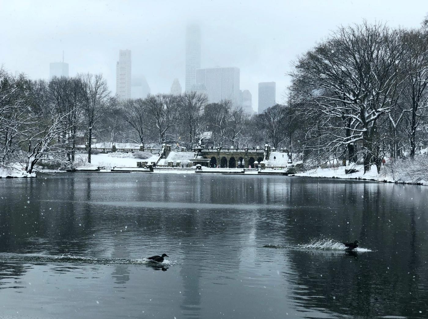 【田螺手机摄影】在纽约市拍雪景、还是中央公园最漂亮_图1-2