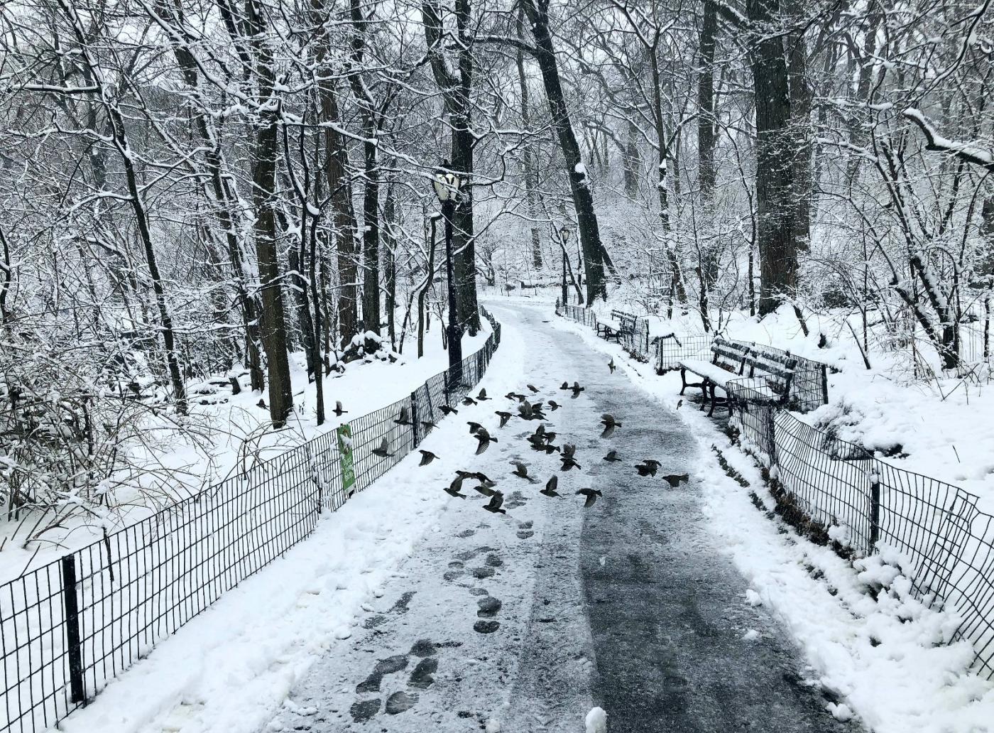 【田螺手机摄影】在纽约市拍雪景、还是中央公园最漂亮_图1-23