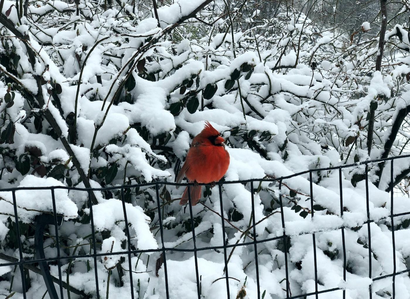 【田螺手机摄影】在纽约市拍雪景、还是中央公园最漂亮_图1-25