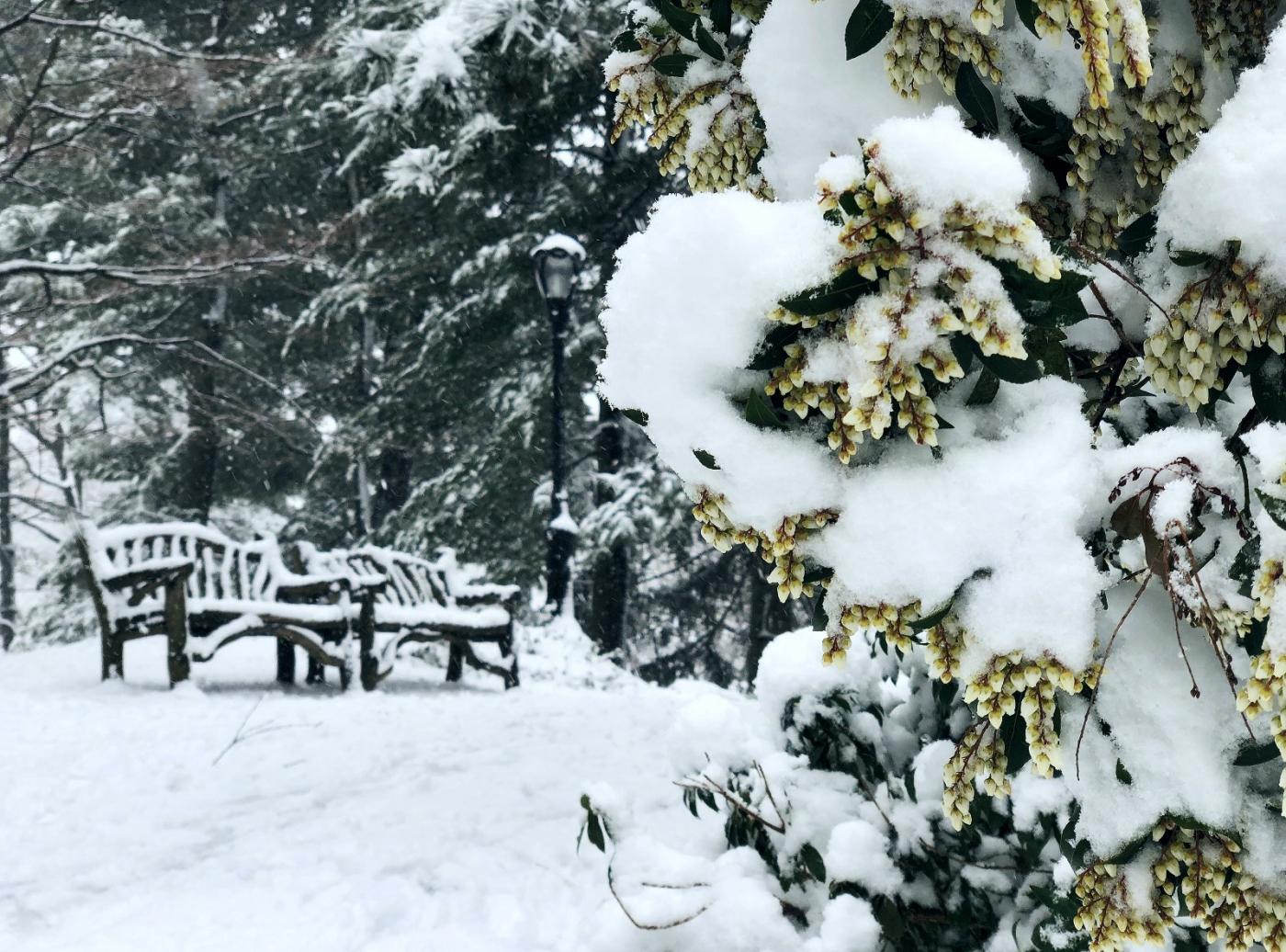 【田螺手机摄影】在纽约市拍雪景、还是中央公园最漂亮_图1-28