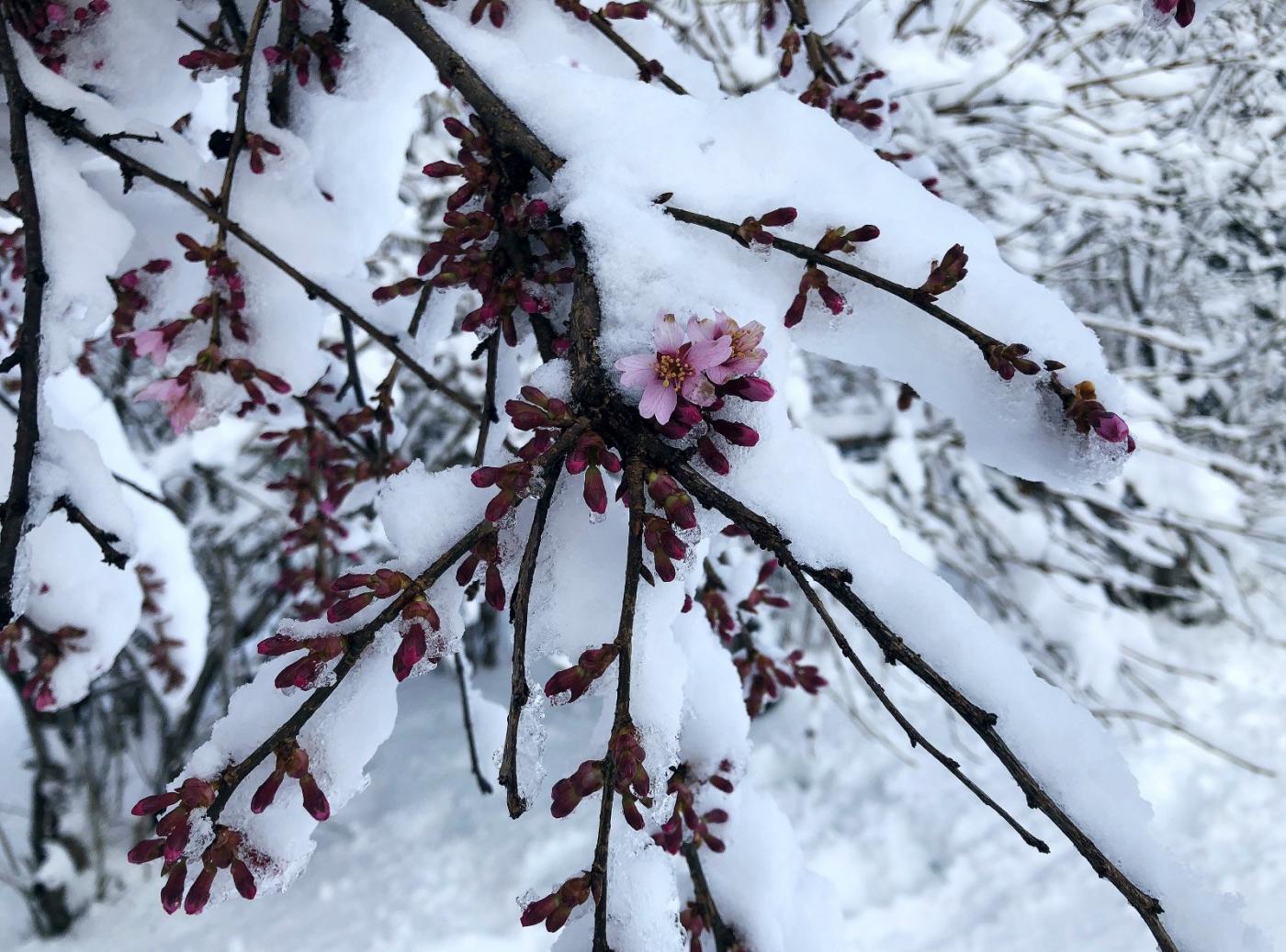 【田螺手机摄影】在纽约市拍雪景、还是中央公园最漂亮_图1-31