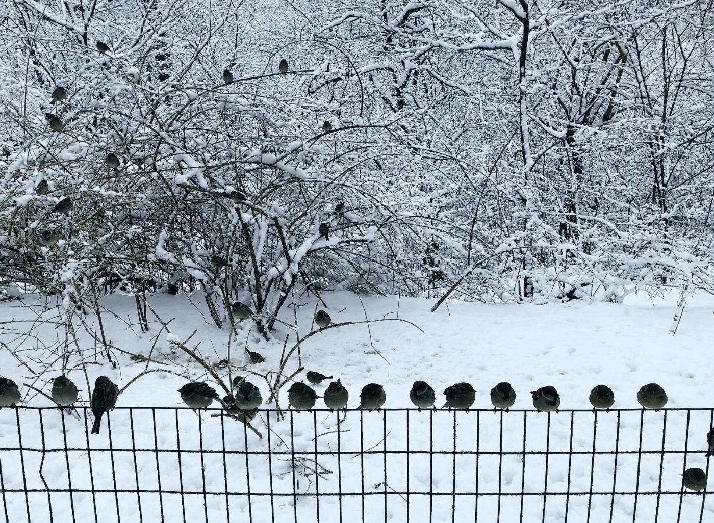 【田螺手机摄影】在纽约市拍雪景、还是中央公园最漂亮_图1-24