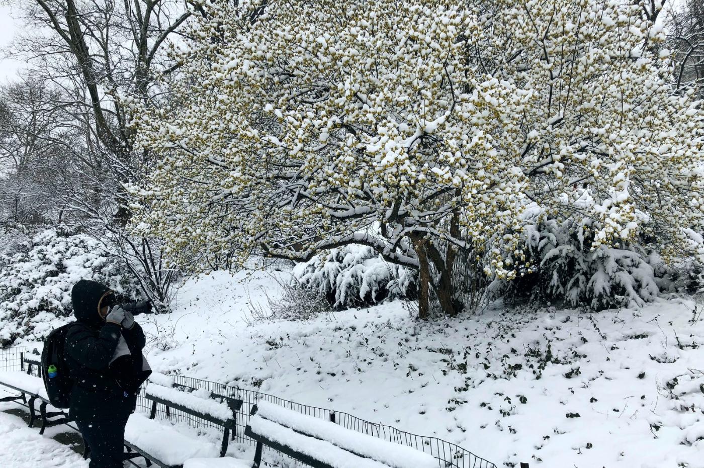 【田螺手机摄影】纽约雪景、还是中央公园最漂亮[二]_图1-8