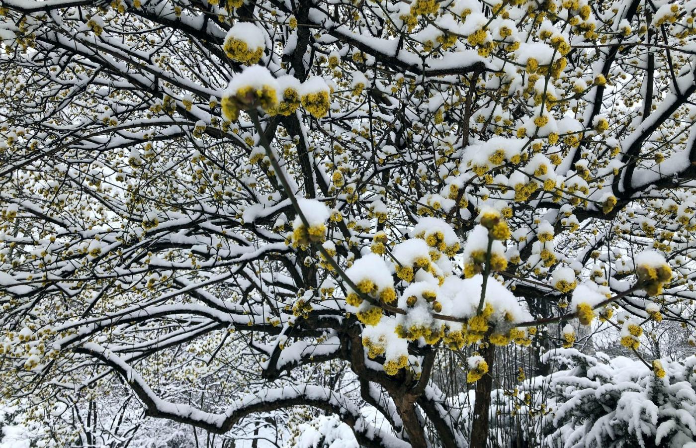 【田螺手机摄影】纽约雪景、还是中央公园最漂亮[二]_图1-9