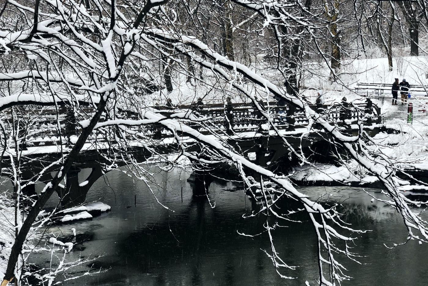 【田螺手机摄影】纽约雪景、还是中央公园最漂亮[二]_图1-12