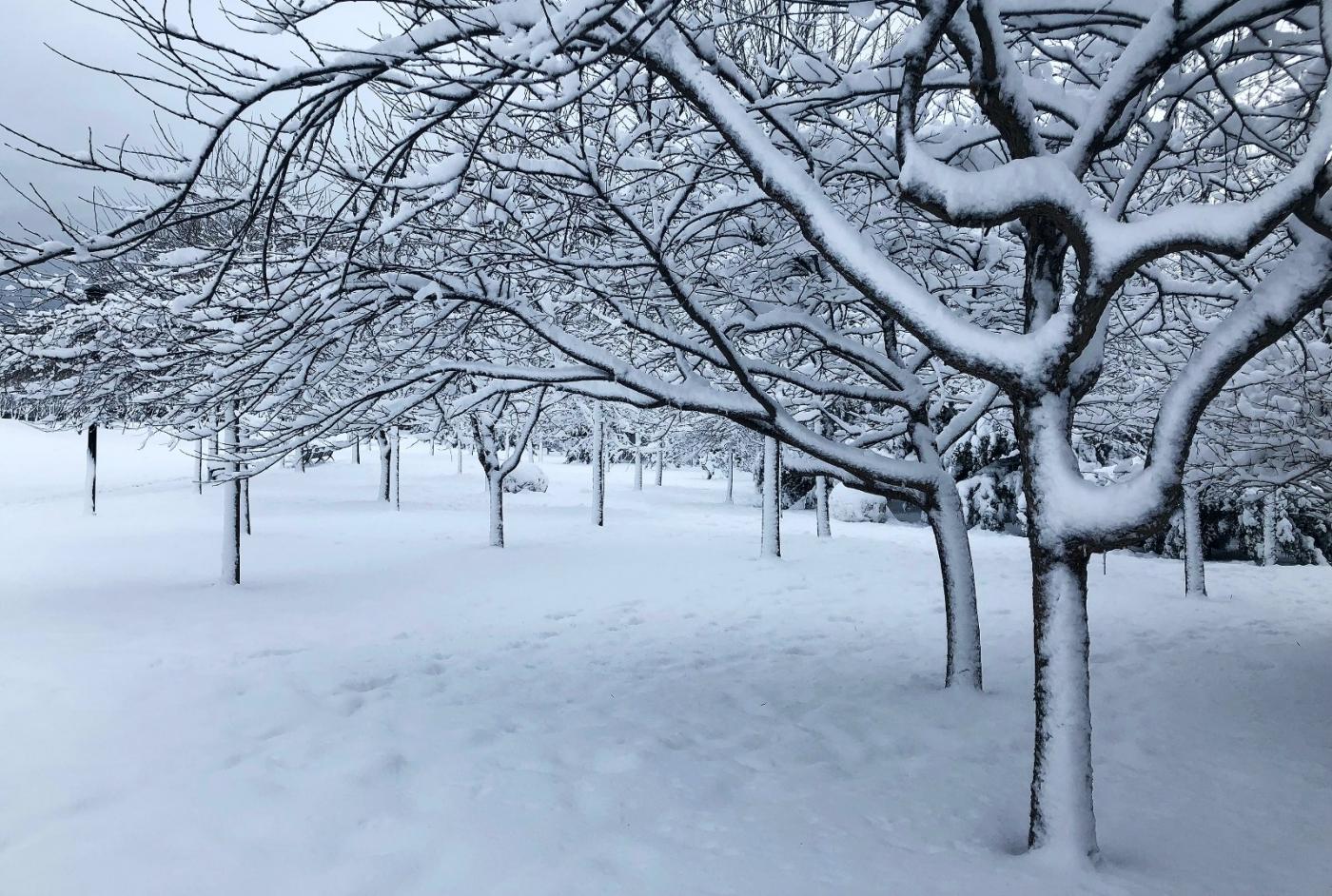 【田螺手机摄影】纽约雪景、还是中央公园最漂亮[二]_图1-20