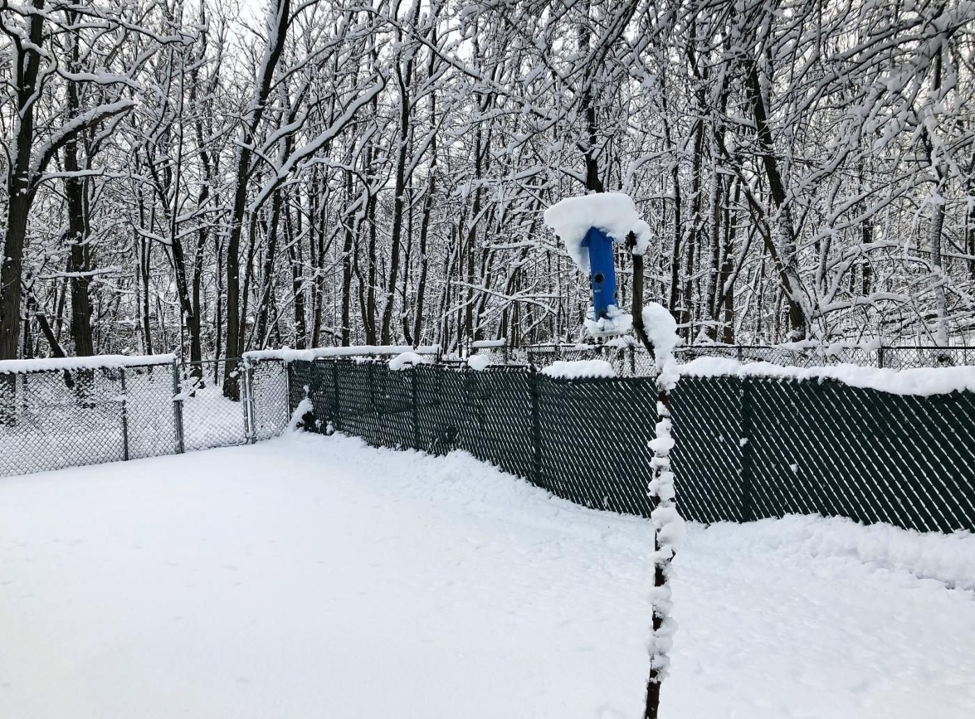 【田螺手机摄影】纽约雪景、还是中央公园最漂亮[二]_图1-29
