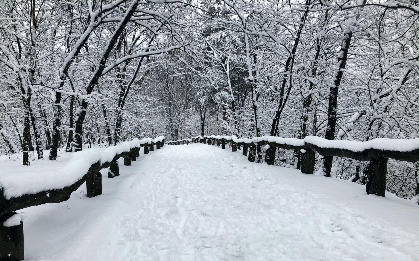 【田螺手机摄影】纽约雪景、还是中央公园最漂亮[二]_图1-28