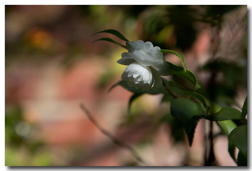 《酒一船摄影》:长岛植物园的山茶花_图1-17