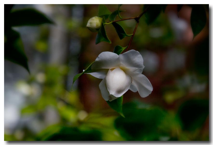 《酒一船摄影》:长岛植物园的山茶花_图1-25