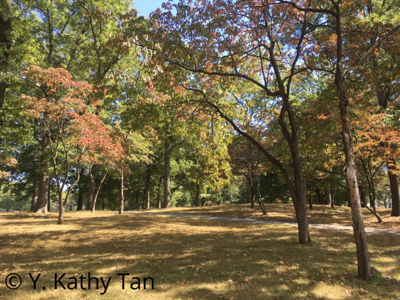 Alley Pond 公园的初秋_图1-7
