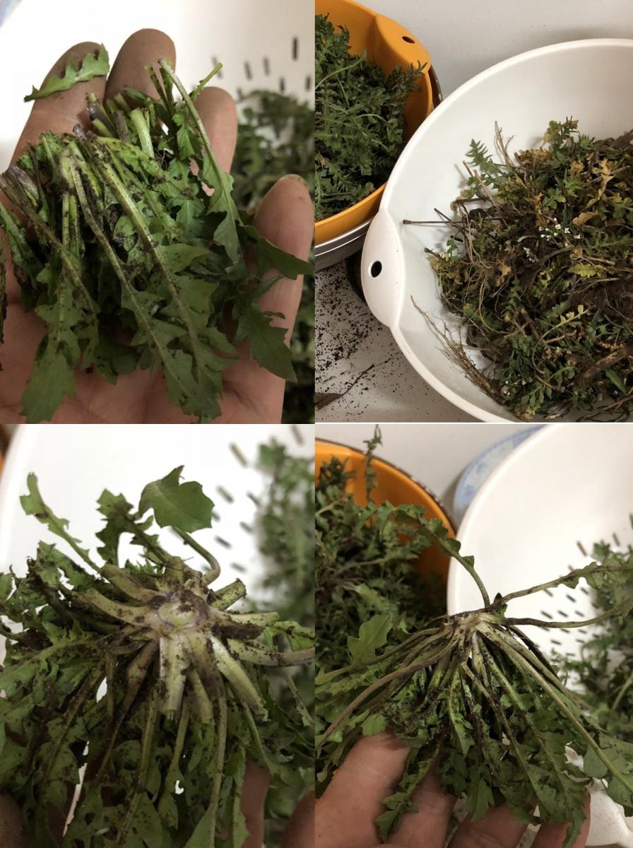 [田螺随拍]分享我做的-野菜青团_图1-14