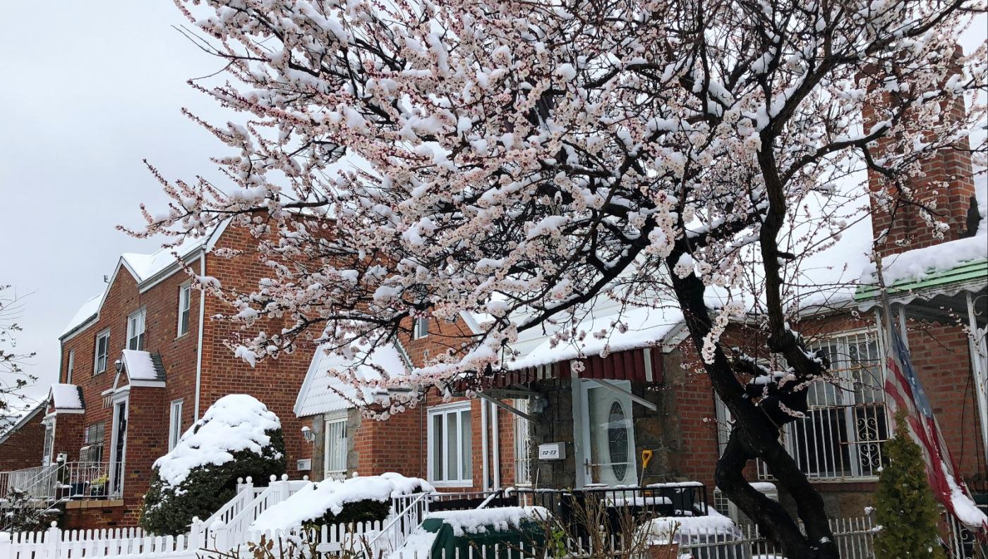 【田螺手机摄影】今早下雪去拍梅花_图1-2