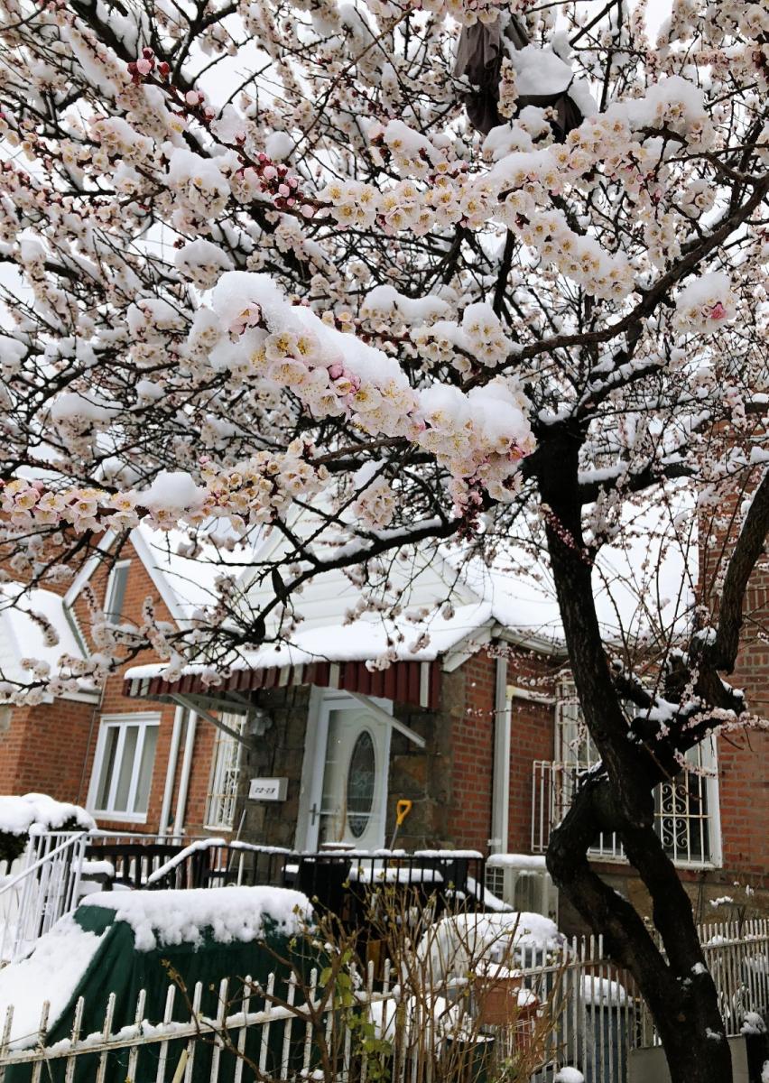 【田螺手机摄影】今早下雪去拍梅花_图1-5