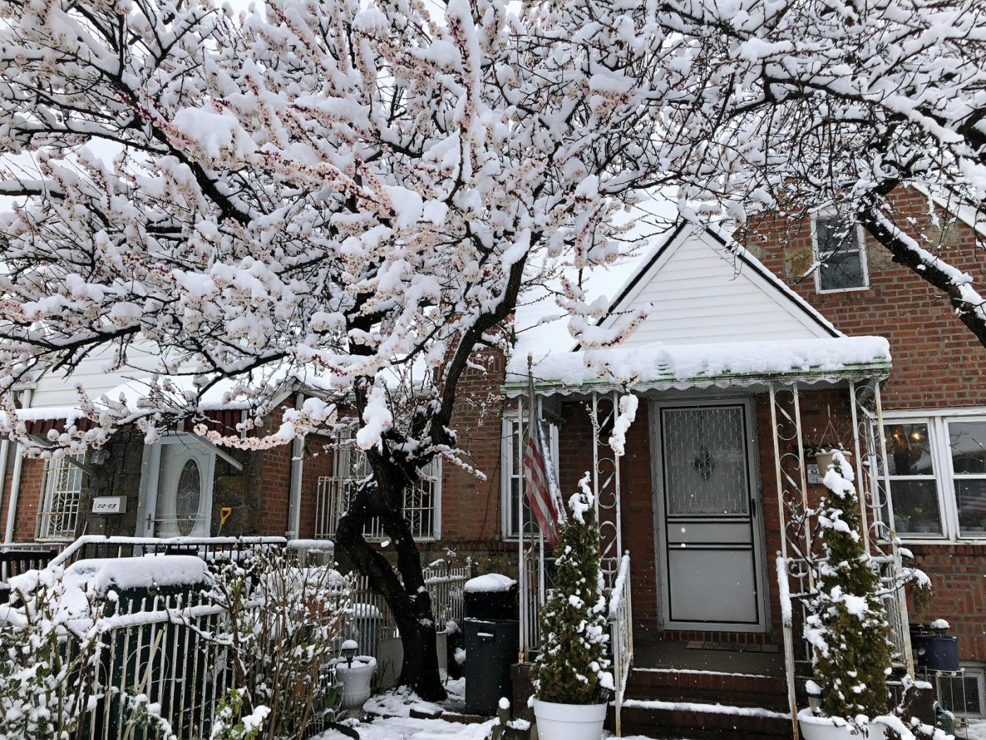 【田螺手机摄影】今早下雪去拍梅花_图1-6